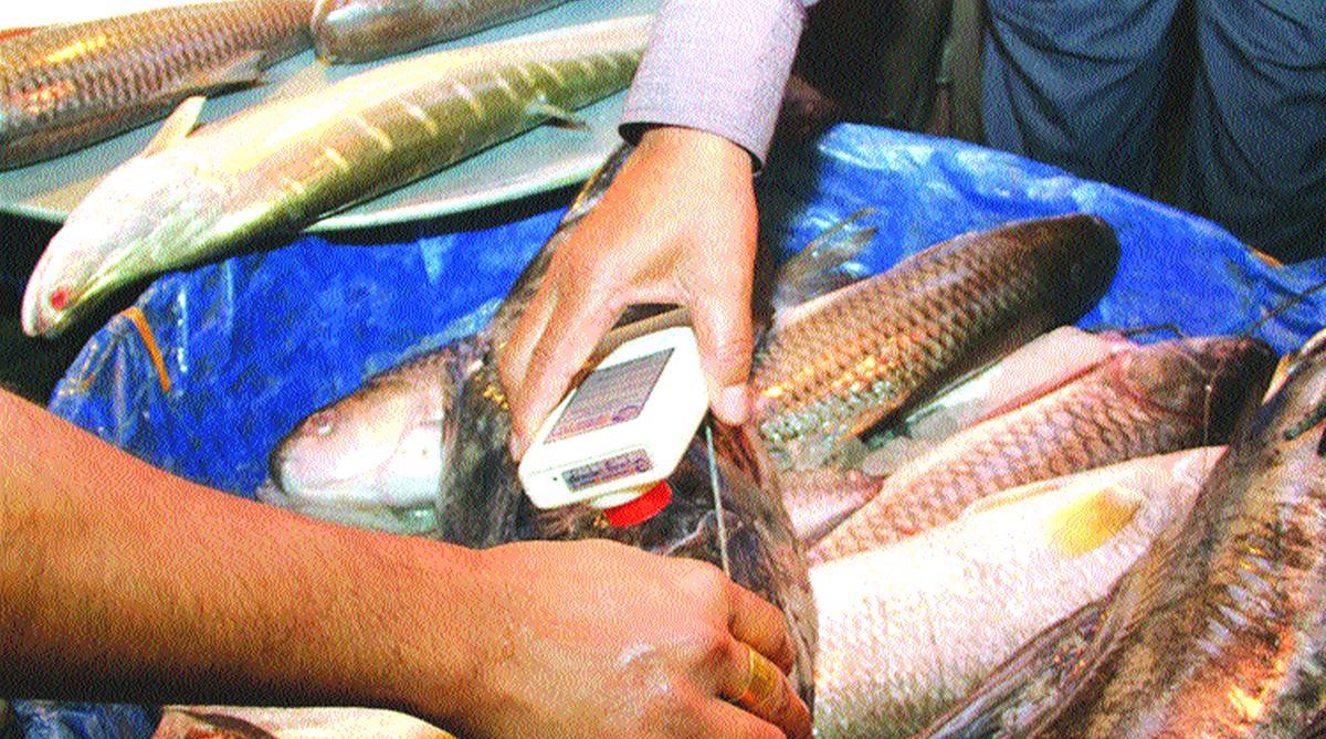 formaldehyde, cancer, Basa catfish