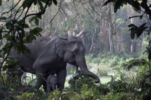 Jungle Ke Baahubali: Epic showcases the magnificence of India