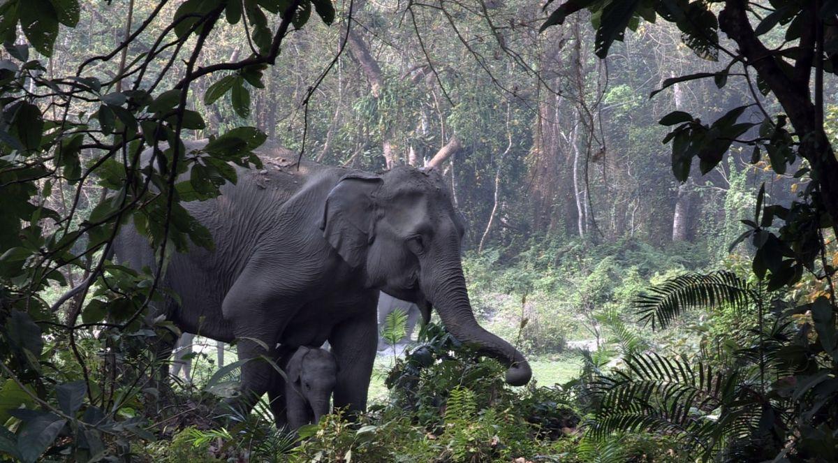 Jungle Ke Baahubali
