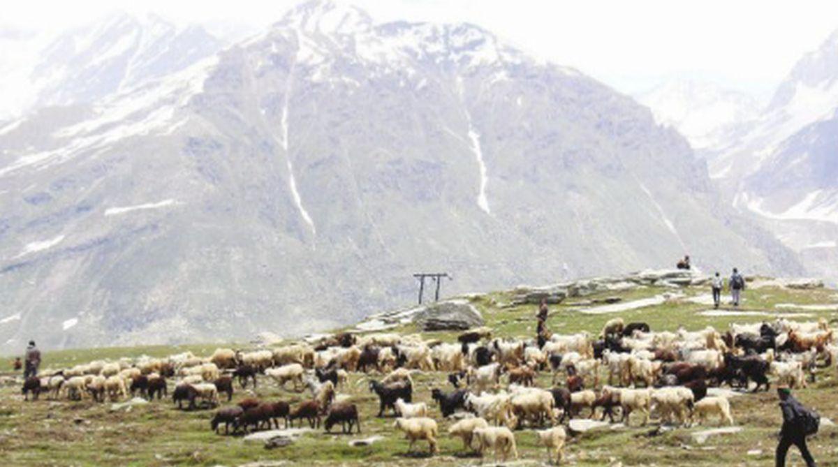 Himachal Pradesh, Bara Banghal, shepherds, Gaddi tribe, Vikas Shukla