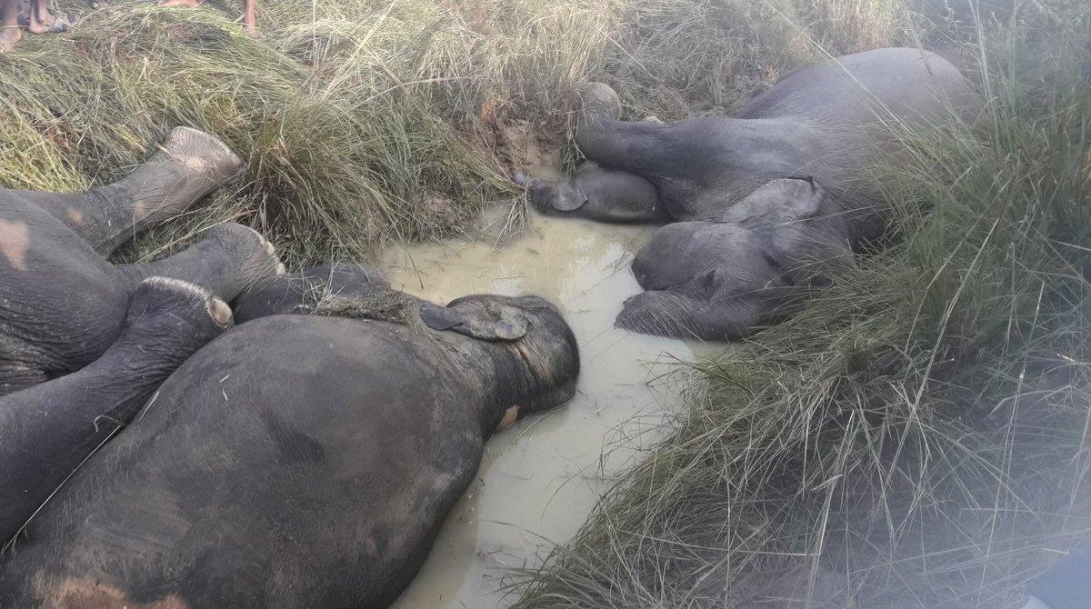 Odisha, Odisha elephants, Odisha elephants death, elephants death