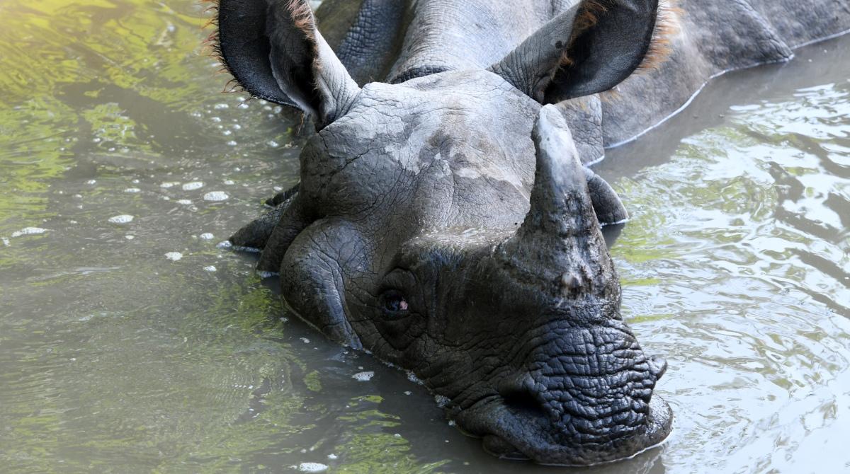 WWF, China, Ban, tiger bone, rhino horn, trade