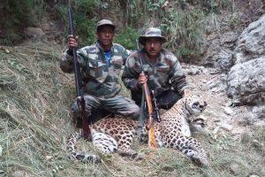 Man-eating leopard killed in Bageshwar