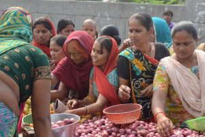 Onion prices to come down soon says Government