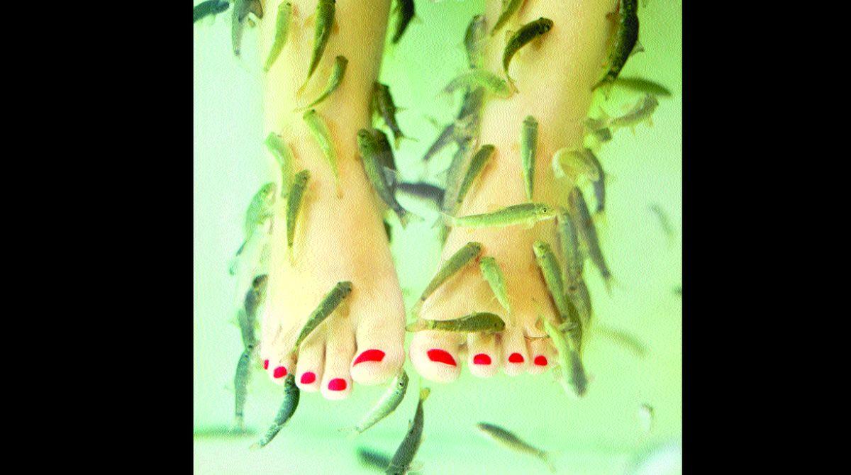 JAMA Dermatology, Maneka Gandhi, fish pedicure, Fish Health Directorate