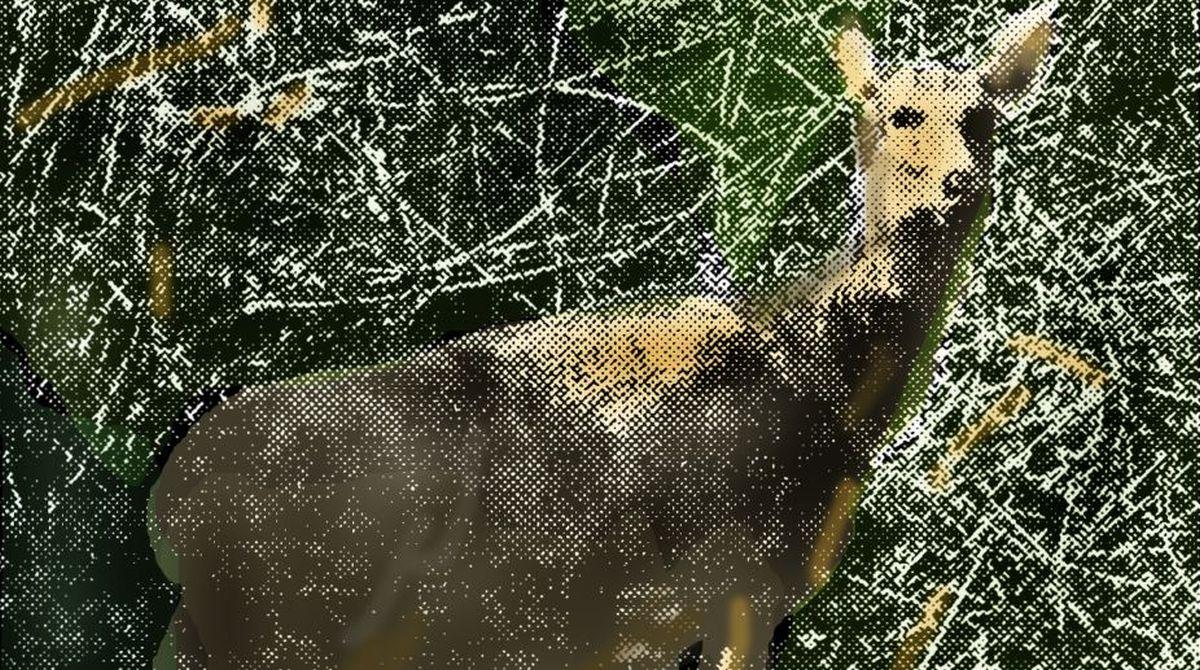 Hazaribagh, deer, wild animals