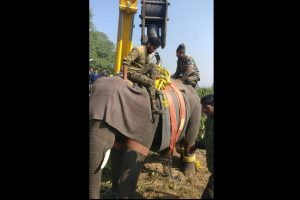 Special operation concluded to tranquilize, shift killer elephant in Haridwar
