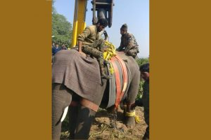 Special operation to tranquilise, shift killer elephant in Haridwar successful