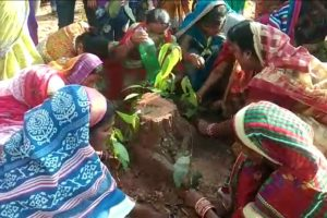 Odisha: Women perform last rites of trees felled for Dhenkanal beer factory