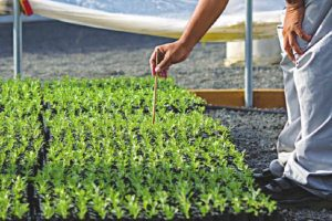 Agrochemical industry: Growing by leaps and bounds