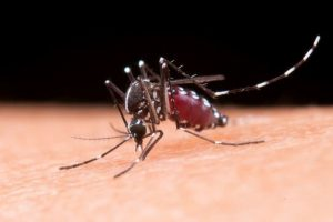 IIT identifies dark regions in chikungunya virus proteins