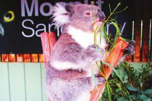 Australia: Kaleidoscope of charms