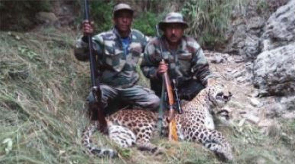 leopard, man-eater, Bageshwar, Uttarakhand, tranquiliser guns, forest department