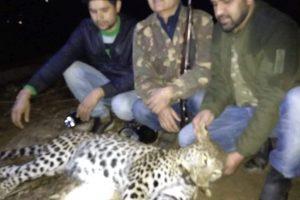 Uttarakhand: Another man-eater leopard eliminated in Bageshwar