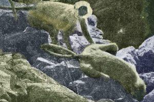 Langur at Taroba