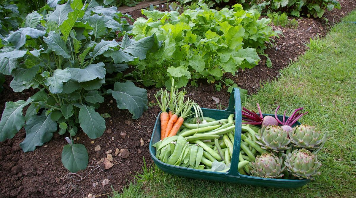 Grow your own succulent super winter vegetables