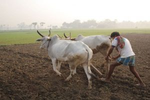 Biju Janata Dal to hold farmers rally in Delhi on January 8