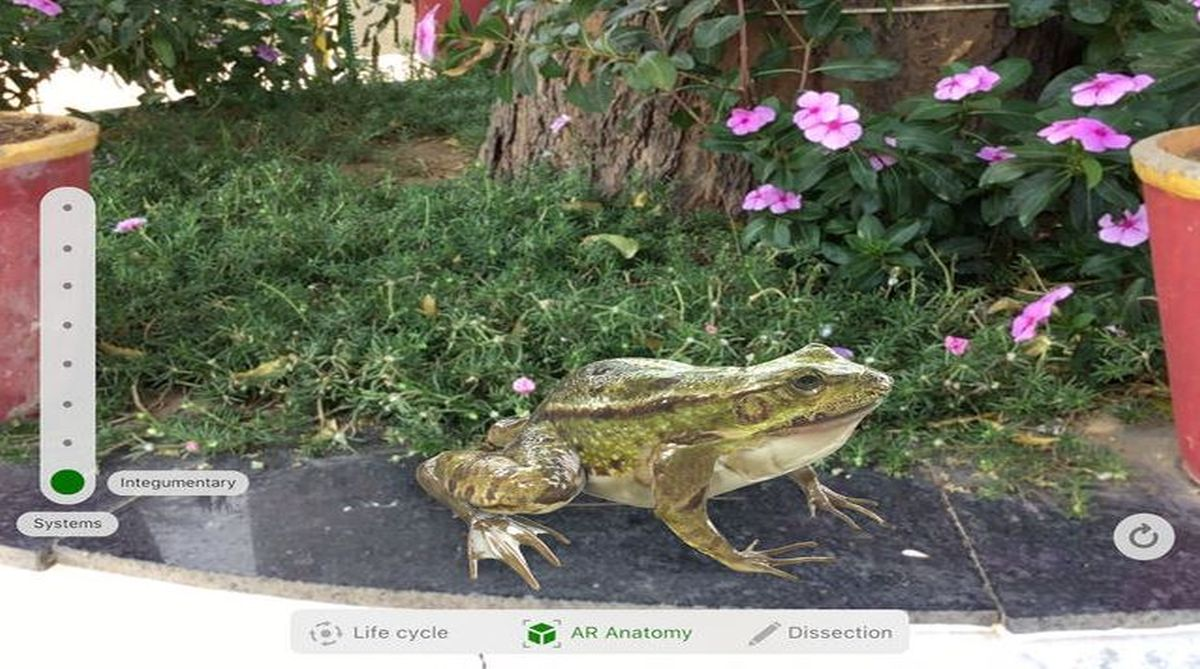 Froggipedia, Ipad, Apple, Apple Augmented Reality