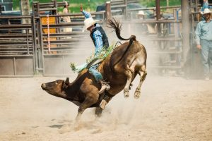 PETA not taking legal action in US against bullriding sport similar to Jallikattu
