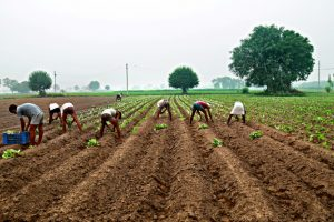 Budget: PHD Chamber expects reforms in farm sector, rationalisation of direct taxes