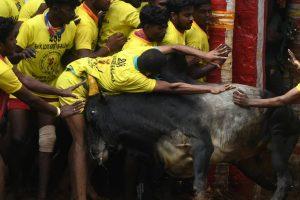 Tragedy at Viralimalai Jallikattu event, two spectators gored to death