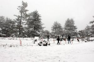 Himachal cold wave intensifies after fresh snowfall