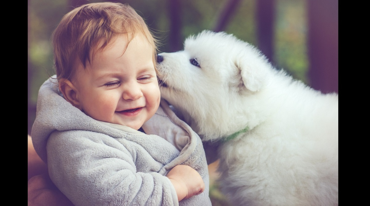 Indian startups for pet parent, Indian Pet Food Market Forecast and Opportunities 2019, DogSpot, Dogsee Chew, TailsLife, PetSutra, Heads up for Tails