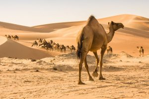 The desert storm: Arabian Nights edition