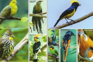 North Bengal — a paradise for birdwatchers