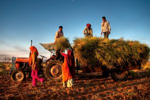 Interim Budget 2019: Govt announces PM Kisan Samman Nidhi, Rs 6000 per yr for farmers with less than 2 hectares of land