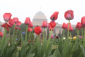 Recounting the annual lure of the Mughal Gardens