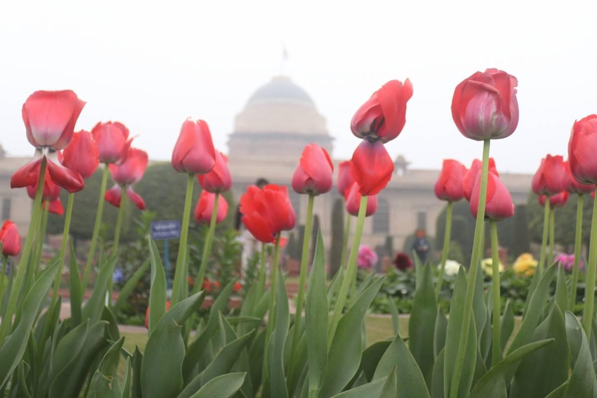 Mughal Gardens, Rashtrapati Bhavan, President, Ram Nath Kovind, Pranab Mukherjee, Suvra Mukherjee, Delhi, Aravali Biodiversity Park, Roshanara Garden, QudsiaBagh
