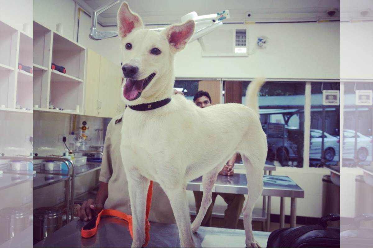 Alexa, dog lovers, Veterinary doctor, CGS Hospital, Tick fever
