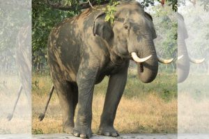 Man killed by tusker in Jhaldah forest