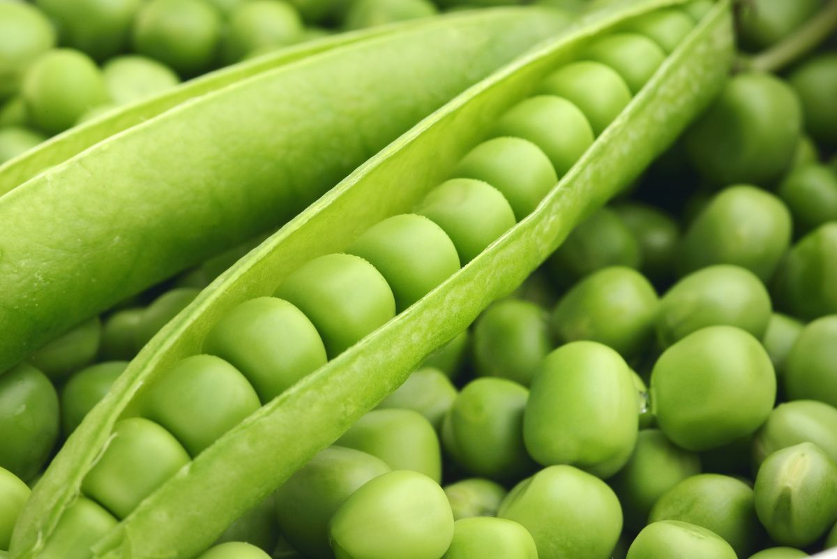 Peas are much more than their sweet zest and pretty green blush