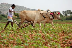 Gujarat govt announces Rs 3,795 crore package for farmers