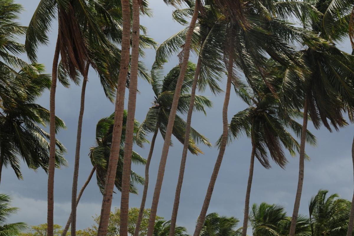 Cyclone Fani, IMD, Red alert, Tamil Nadu, Kerala