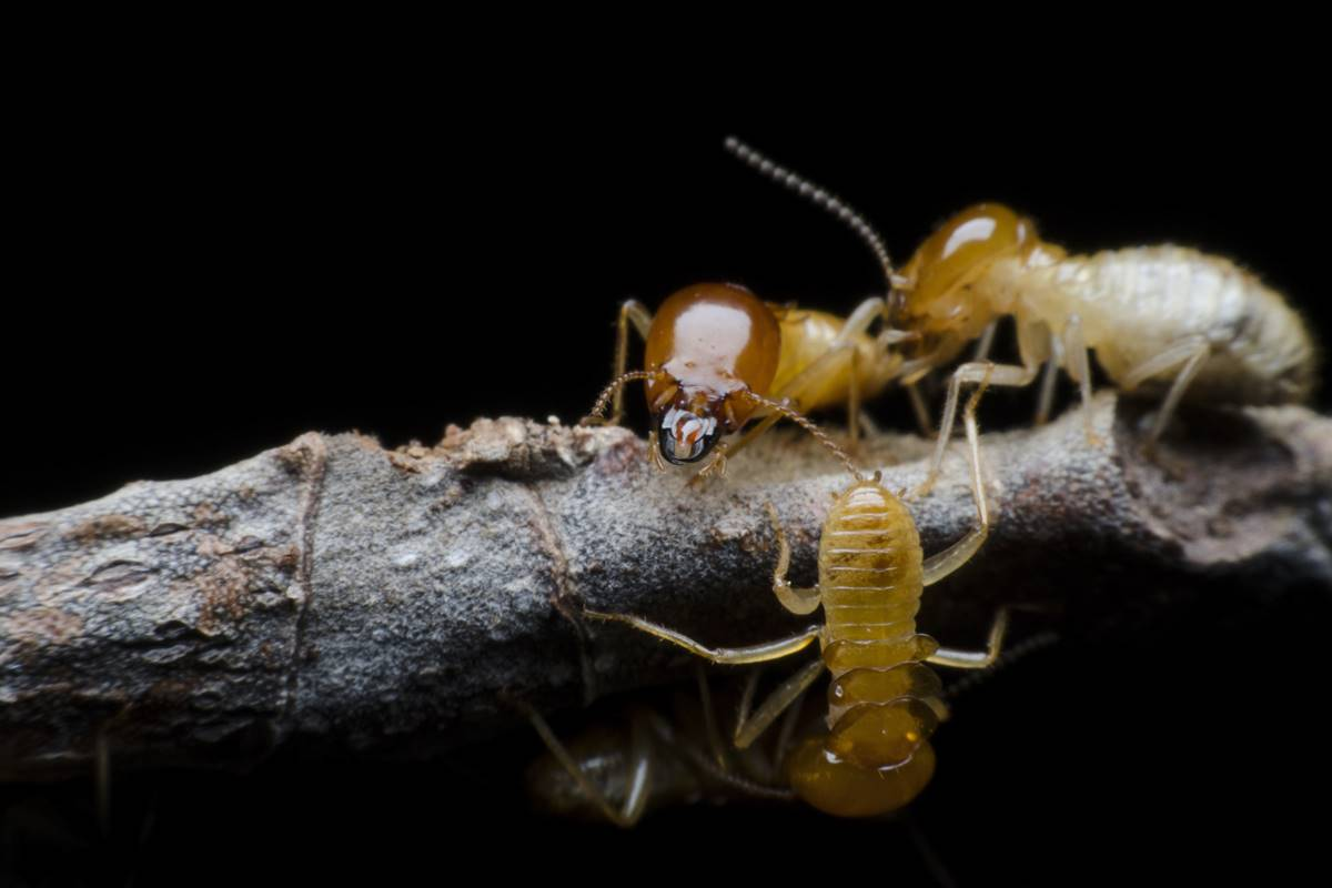 Pesticides, pests, Entomotherapy, pest control, insects, honey bee, cancer cells