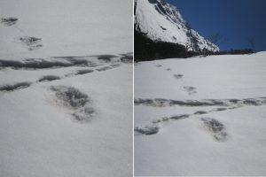 Some Yeti myths and stories, as Army finds 'footprints' of the Abominable Snowman