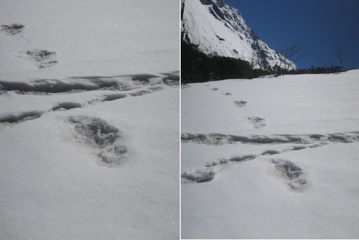 Yeti myths, Footprints, Indian Army, Nepal, Yeti