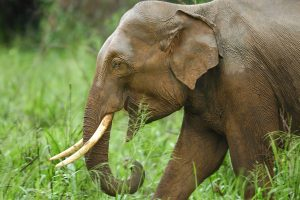 Elephant electrocuted in north Bengal forest, one arrested