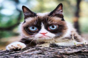 Internet sensation Grumpy Cat passes away