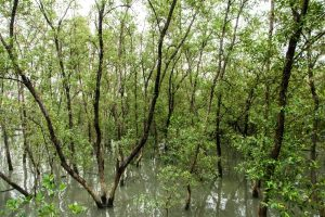 Mangroves destroyed to build helipad?