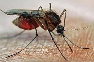 15 dead, over 15,000 infected by dengue in Sri Lanka
