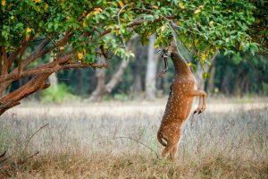 Adina Deer Park: A breeding centre