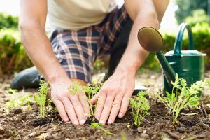 How to create gardens at home