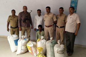 Haryana Police seizes 131 kg ganja from Rewari