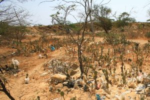 Israel ready to assist India in combating Desertification