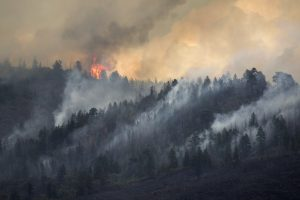 Himachal Pradesh gears up to control forest fires
