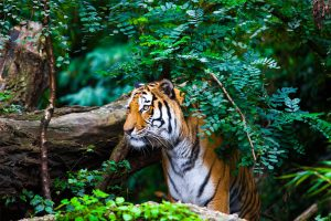 Showers, curd, lassi help city zoo animals combat summer heat